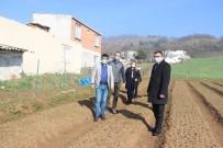Çan Belediyesi Salep Fidelerinin Gelişimini Tarım Müdürlüğü İle Birlikte Takip Ediyor