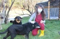 Sokak Köpekleri Kadın Doktorun Yolunu Dört Gözle Bekliyor