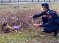 Jandarmanın Yaralı Bulduğu Tilki Tedavisinin Ardından Doğaya Salındı