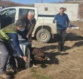 Kara Akbaba Bakım Ve Tedavisinin Ardından Doğaya Salındı