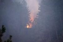 Kastamonu'da 3 Ev Ve Ormanlık Alanı Kül Eden Yangın Sürüyor