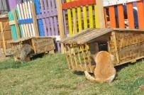Atık Malzemeler Sokak Hayvanlarına Ev Oldu