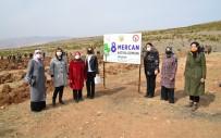 Kırşehir'de, Mercan Ormanı Oluşturuldu