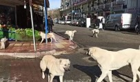 Siirt'te Grup Halinde Gezen Başıboş Köpekler Vatandaşları Korkutuyor