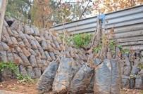 Gercüş'te Çiftçilere Fıstık Ve Badem Fidanı Dağıtıldı