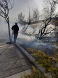 Yeşilhisar'daki Yangında 10 Ağaç Kül Oldu