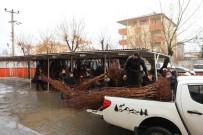 Iğdır'da Çiftçilere Kayısı Fidanı Dağıtıldı