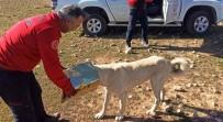 Şanlıurfa'da Başına Teneke Sıkışan Köpek Kurtarıldı