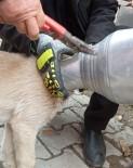 Kafası Güğüme Sıkışan Köpeği İtfaiye Ekipleri Kurtardı