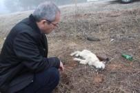 Ormana Terk Edilen Sokak Hayvanlarına Kaymakam Şefkati