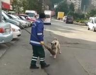 Temizlik Görevlisi Köpekle Olan Güldüren Kovalamacasını Anlattı