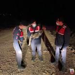 Yaralı Tilki Jandarma Tarafından Kurtarıldı