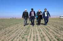 Eskişehir'de 20 Çeşit Yerli Ve Milli Tohum Deneme Çalışması