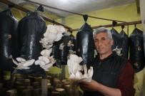 Ürettiği İstiridye Mantarında Siparişlere Yetişemeyince Müşterilere Kilo Sınırı Getirdi