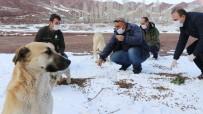 Aksaray'da Sokak Hayvanlarına Yiyecek Ve Mama Bırakıldı