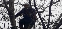 Arı Kovanları Ve Ormanları Yaktığı Gerekçesiyle Ceza Gelen Vatandaş, İntihar İçin Ağaca Çıktı