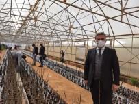 Bingöl'de İlk Kez Ceviz Ve Badem Aşılı Fidan Üretimine Geçildi