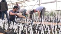 Bingöl'de Üretilen Ceviz Ve Badem Fidanları, 8 İlde Toprakla Buluşturulacak