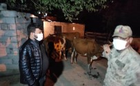 Hayvan Hırsızları JASAT'tan Kaçamadı
