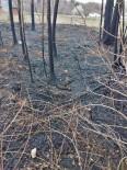 Amasya'da Ağaçlık Alandaki Yangında 5 Yavru Köpek Ve Bir Kaplumbağa Telef Oldu