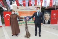 Amasya'da İncir, Elma Ve Kiraza Alternatif Olacak
