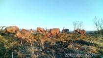 Elazığ'da Yaban Hayvanları İçin Doğaya 15 Ton Yem Bırakıldı