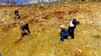 Güneyyurt'ta 3 Bin Çam Fidanı Toprakla Buluşturuldu
