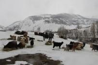 Hayvancılıkla Uğraşanlar, Kışın Zorlu Kısmını Geride Bıraktı