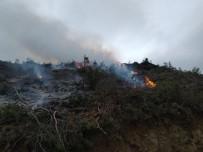 Bucak'ta Ormanlık Alanda Yangın Kısa Sürede Söndürüldü