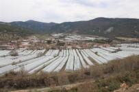 Karadeniz'in Sebze Üssü Amasya'da Domates Fideleri Toprakla Buluştu