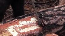Kastamonu'da Ormancılar Yanan Alanlara Yeniden 'Can Vermek' İçin Çalışıyor