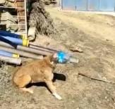 Kafası Bidona Sıkışan Köpeği Vatandaş Kurtardı