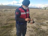 Yaralı Güvercini Jandarma Kurtardı