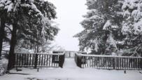 Artvin'in Ünlü Kafkasör Yaylası Yağan Karla Beyaza Büründü