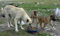 Sahipli Kedi Ve Köpeklerin Kimliklendirilmesi Mecburi Olacak