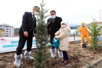 Vali Masatlı Açıklaması 'Avrupa'da Ağaçlandırma Bakımından 1., Dünyada İse 6. Sıradayız'