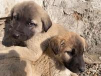 Annesiz Kalan Yavru Köpekler Ağrılı Çocukların Sevgisiyle Hayata Tutundu