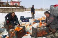 Tonlarca Portakal Kar İçerisinden Tek Tek Toplandı
