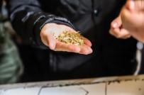 'Kavılca Buğdayı' Ülke Ekonomisine Katma Değer Katacak