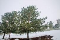 Ağrı'da Kar Altında Kalan Ağaçlar Göz Kamaştırdı