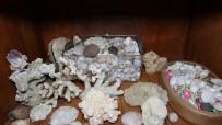 Denizin Bulunmadığı Mardin'de, Deniz Canlılarının Binlerce Yıllık Fosilleri Sergileniyor