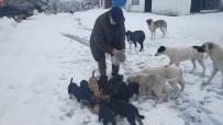 Karla Kaplı Yaylada Sokak Hayvanları Besleniyor