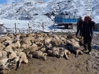 Koyun Kuzu İzdihamında 82 Hayvan Telef Oldu