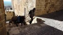 Mardin'in 'Kadrolu Eşekleri' İş Başında