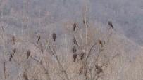 Tunceli'de Kara Çaylak Yoğunluğu, Tabiat Parkını Doldurdular