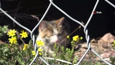 Artvin'de Çelik Tel Örgülerin Arasında Mahsur Kalan Kedi Kurtarıldı