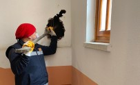 Apartman Boşluğuna Düşen Kediyi İtfaiye Ekibi Kurtardı