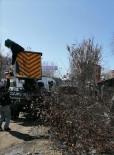 Kars'ta Ağaçlar Budanıyor