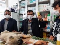 Kulağı Ve Kuyruğunu Kestikleri Yavru Köpeği Ölüme Terk Ettiler