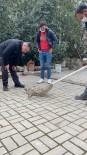 Otomobilin Çarptığı Kediyi Polis Kurtardı